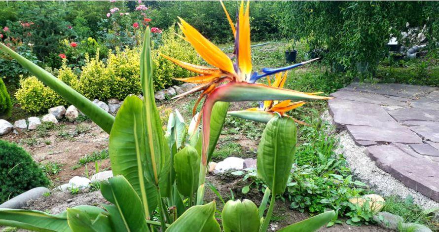 گل و گیاه دادمهر