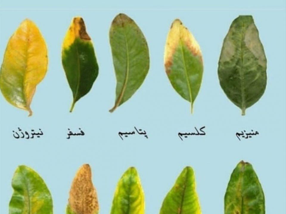تغذیه گیاهان